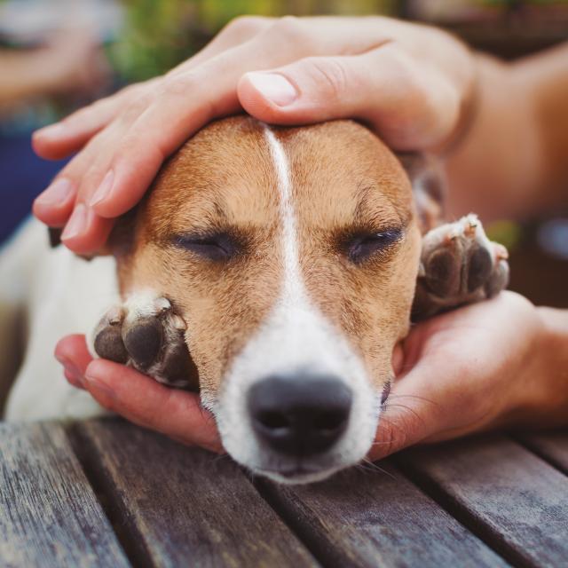 damos lo mejor – perro
