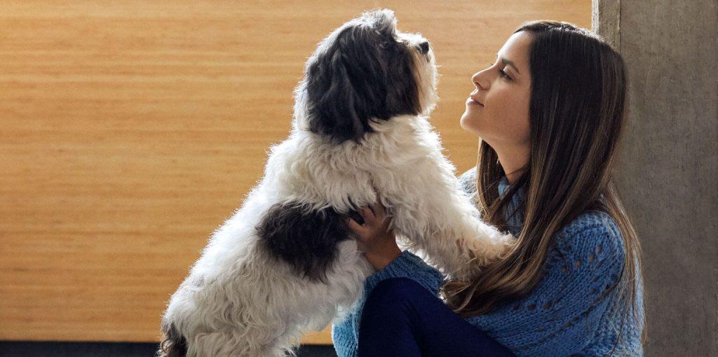 mi mascota, mi familia – perro