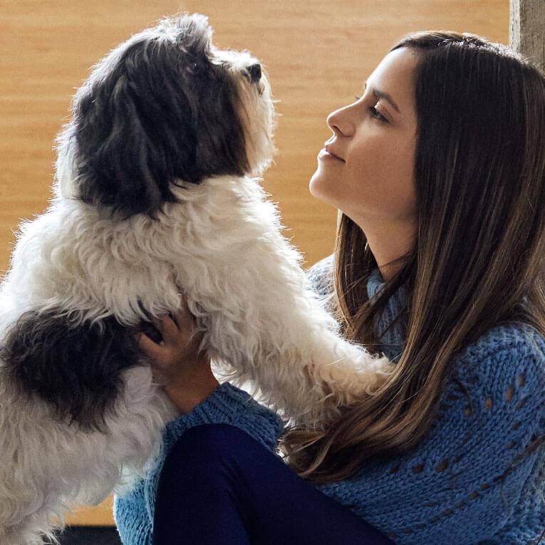 my pet, my family – perro