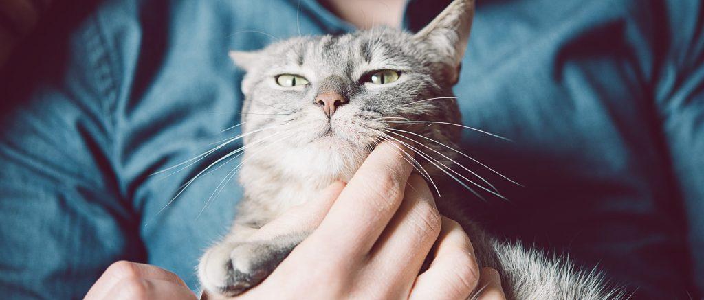damos lo mejor – gato