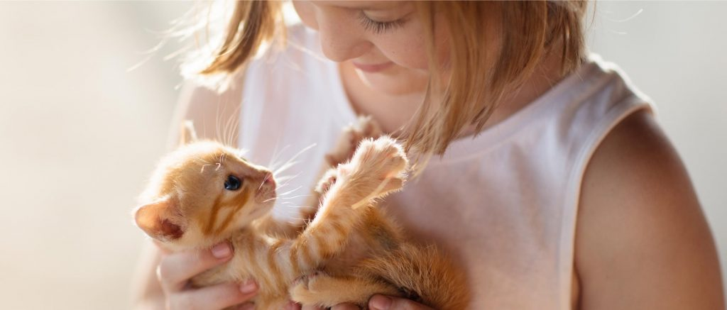 mi mascota, mi familia – gato